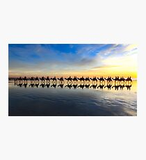 Row of camels walking on Cable Beach at sunset Photographic Print