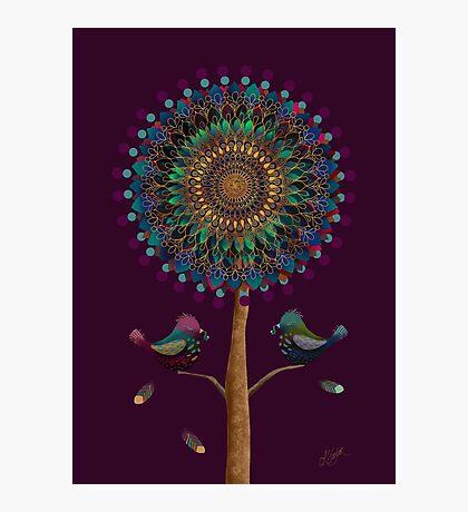 The Mandala Tree Photographic Print