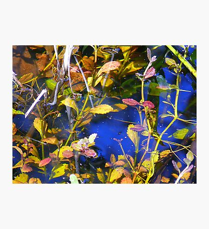 Water Garden Reflects. Photographic Print