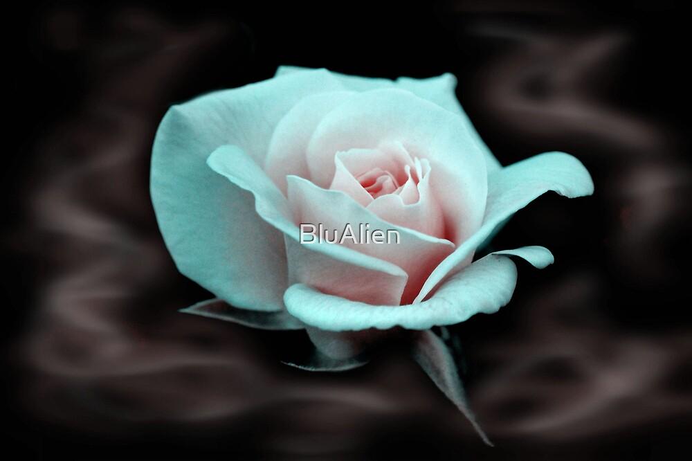 Smokey Rose by PixelBoxPhoto