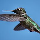 Humming Bird Inflight by PixelBoxPhoto