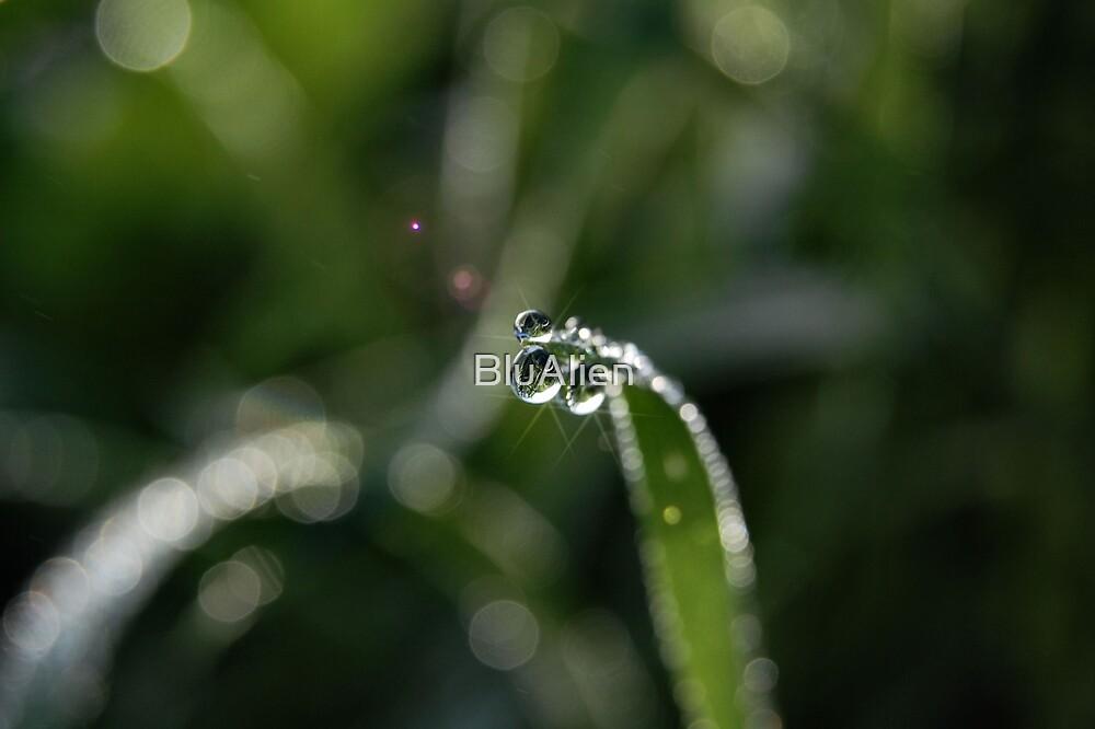 Sparkle by PixelBoxPhoto