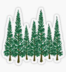 Pegatina transparente En los pinos