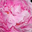 partial pretty pink peony by dedmanshootn