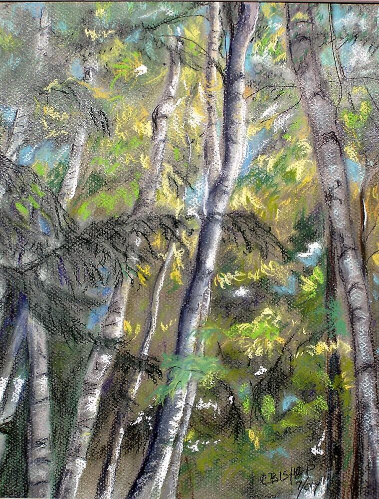 Northern Birch by Carolyn Bishop