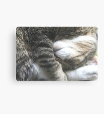 Sleeping Funny  Canvas Print