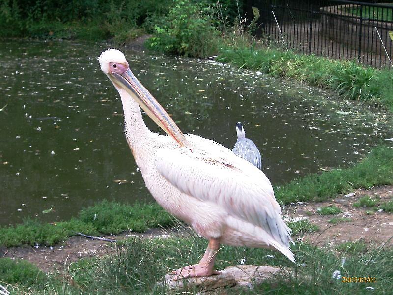pink bird by ampwizbit