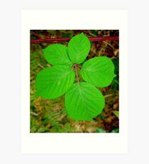 5 Leaves Art Print