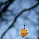 Falling by Classicperfection