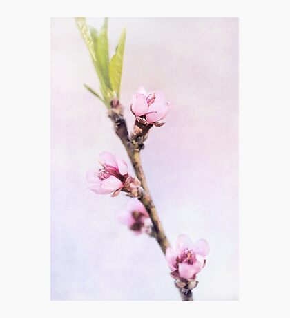 Spring at Last - Lovely Peach Blossoms Photographic Print