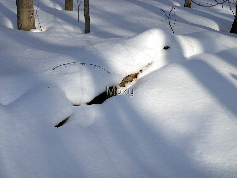 More Shadows in the Snow by Moxy