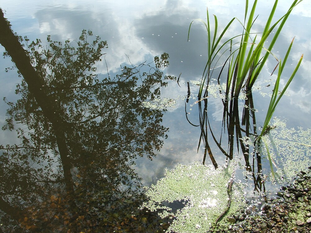 the pond in summer by budge666