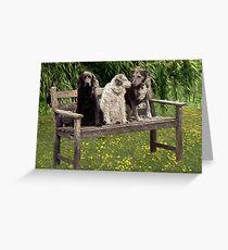 A shaggy dog story Greeting Card
