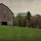 Cloudy day on the farm by vigor