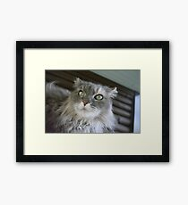 My DUMB cat Framed Print