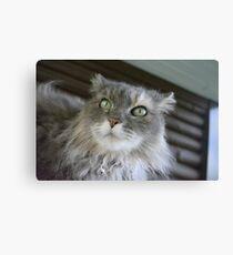 My DUMB cat Canvas Print