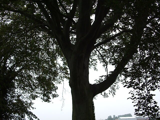 tree by budge666