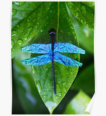 Blue Dragonfly - Origami Dragonfly Poster