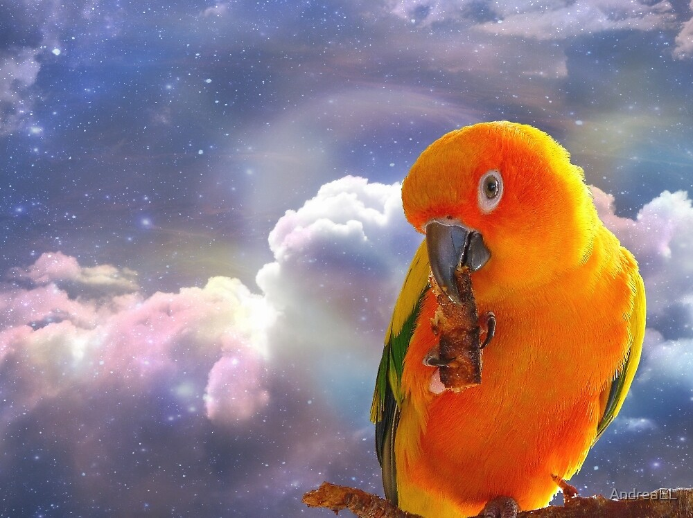 I'm Your Sunshine On A Cloudy Day...-Sun Conure - NZ by AndreaEL
