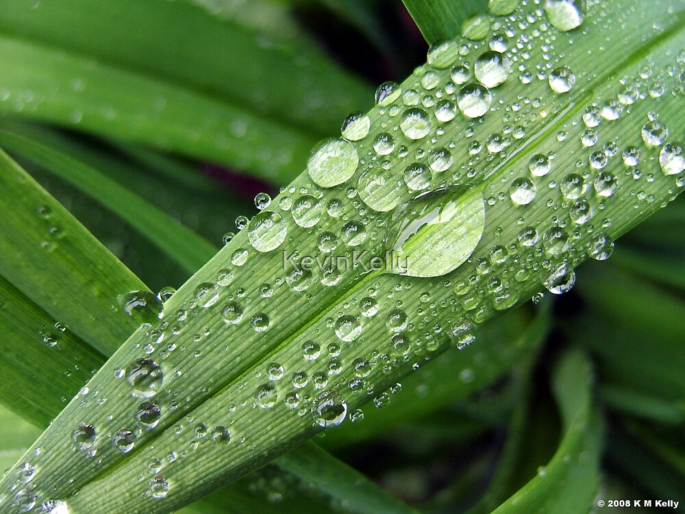 Water droplets by KevinKelly