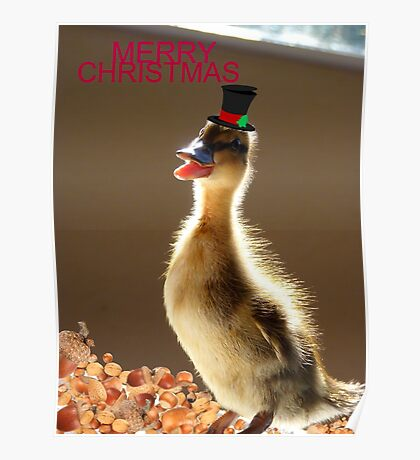 Merry Christmas - Duckling - NZ Poster