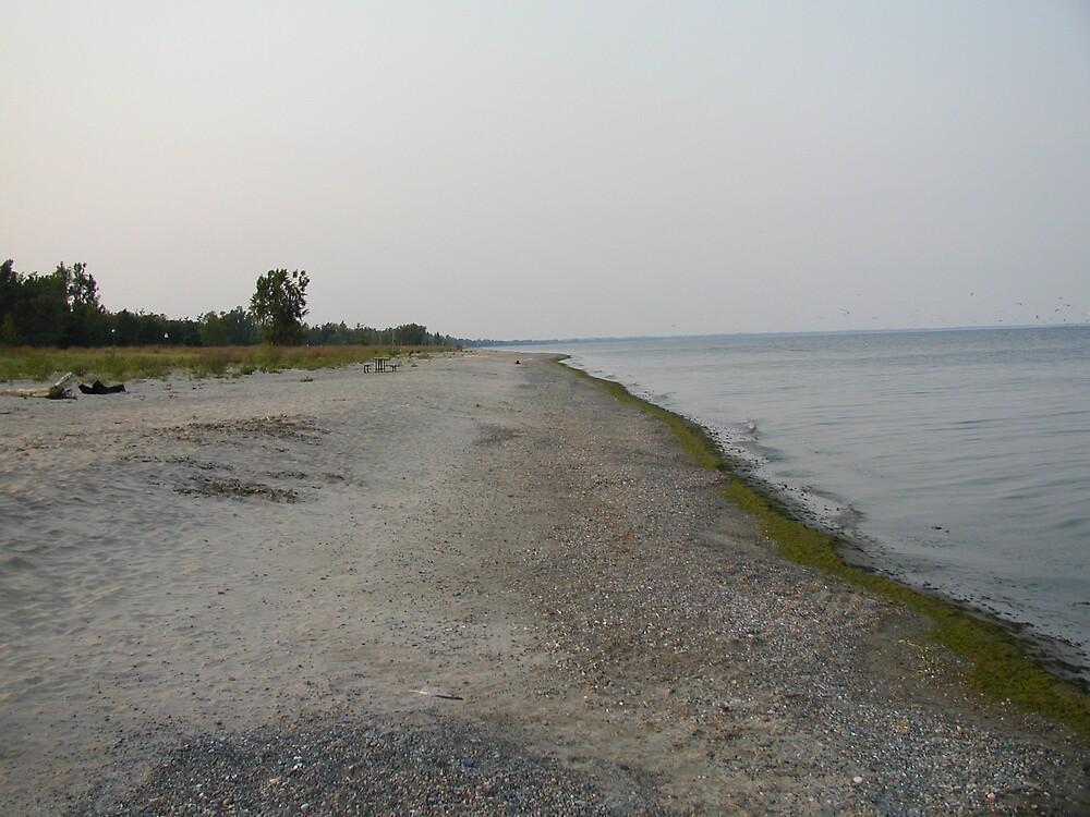 Lake Erie Beach by Ronald DeRosa
