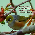 Special & Beautiful - Christmas Greeting Card - NZ by AndreaEL