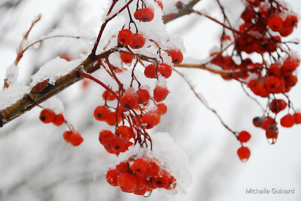 Colors of winter by Michelle Guinard