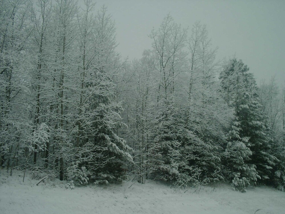 winter storm by chrislaf1972
