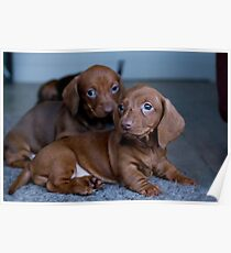 Two Puppies Poster