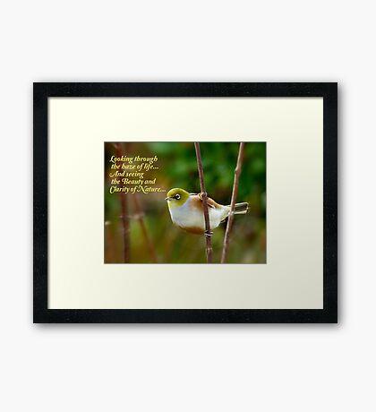 Looking Through The Haze Of Life.... - Silver-Eye - NZ Framed Print
