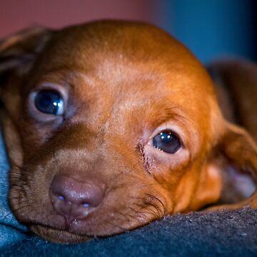 Sweet Puppy by risingstar