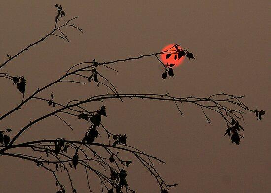 Bushfire Sunset by Rosina  Lamberti