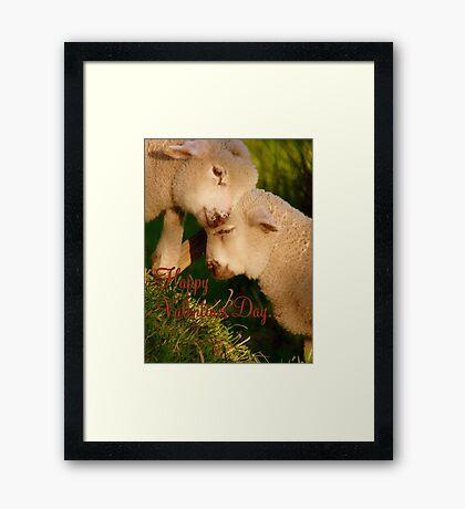 Happy Valentines Day - Lambs - NZ Framed Print