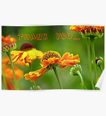 Thank you - Black Eyed Susan - Cone Flower - NZ Poster