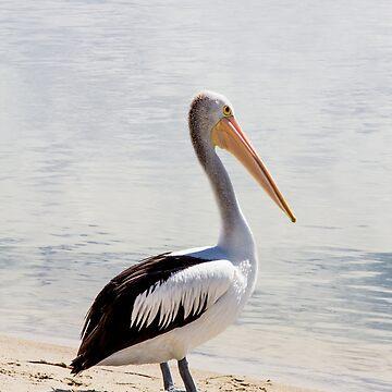 Pelican At Seaside by risingstar