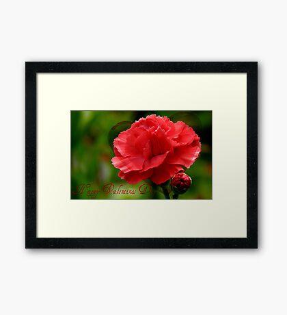 Happy Valentines Day! - Carnation - NZ Framed Print