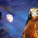 They Will Soar On Wings Like Eagles.. -  Harrier Hawk - NZ by AndreaEL