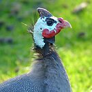 This Mask Is A Disguise!! - Guineafowl - NZ by AndreaEL
