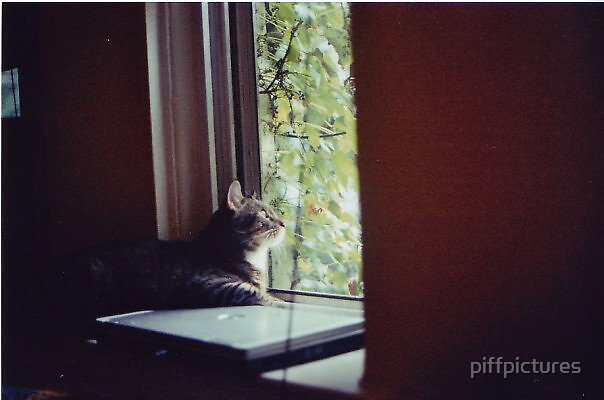 cats love green by piffpictures
