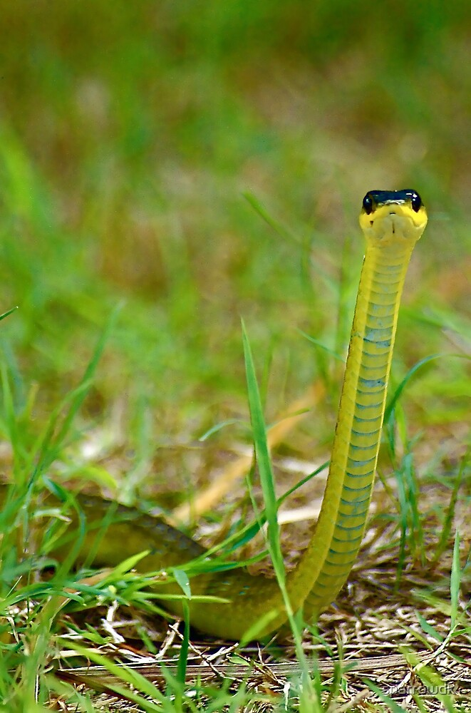 Snake by sparrowdk