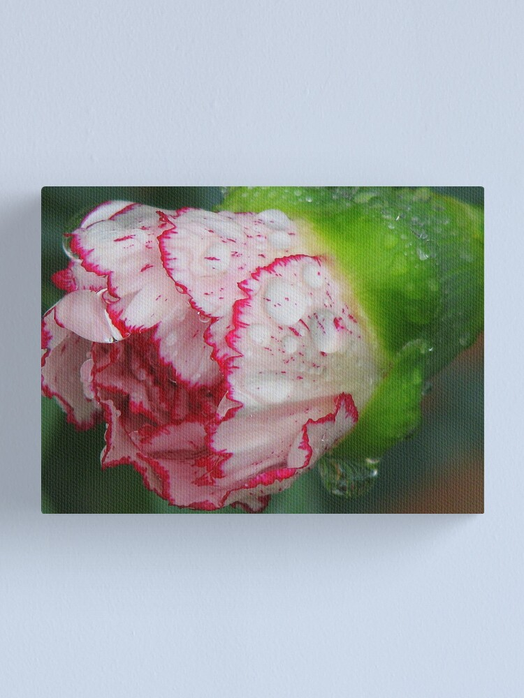 Alternate view of Carnation 1 Canvas Print