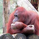 Red Orangutang by Rosalie Scanlon