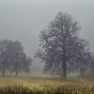 Silence in the fog by Antanas