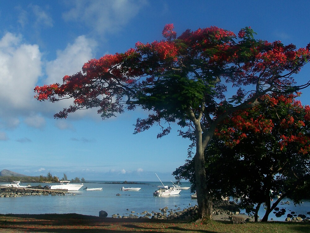 Red tree Mauritius 2 by justinse