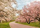 Magnolia Way by Jessica Jenney