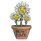 Brilliant Flowers - Growing Einstein Flowers by jitterfly
