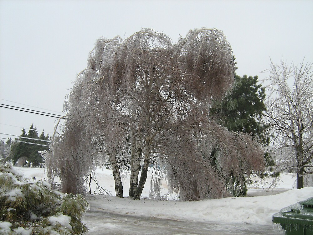 Ice Storm 2008 by islandtris