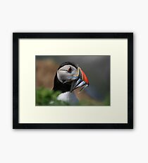 Beakful of Fish Framed Print