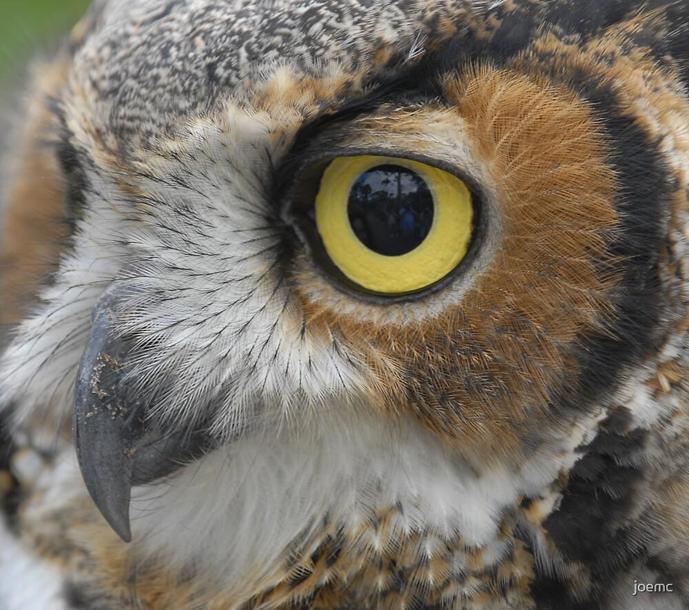 Predators eye by joemc